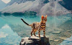 Diese Katze hat Reiselust