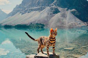 Diese Katze hat keine Angst vor Wasser