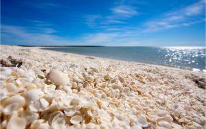 Dieser Strand besteht nur aus Muscheln