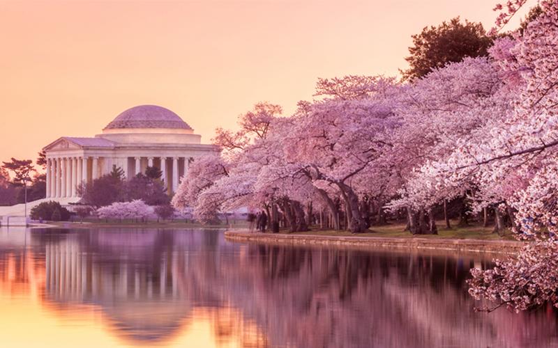 Um die Kirschblüte zu erleben, musst du nicht nach Japan