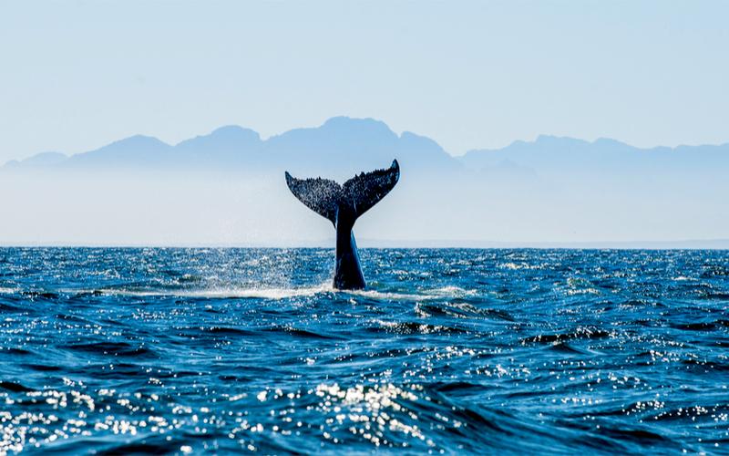 Die besten Spots, um Wale zu beobachten