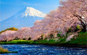 Erlebe die Kirschblüte auch in Europa
