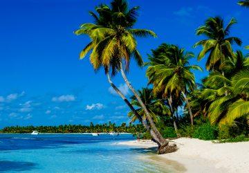 Perfekt für einen tropischen Urlaub