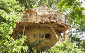 Baumhaus in Frankreich