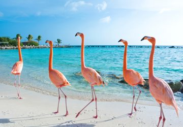 süße Tiere am Strand